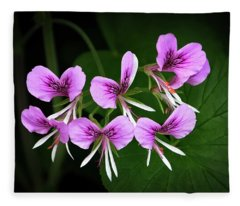 Scented-leaved Geranium  Fleece Blanket
