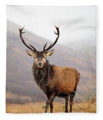 Scottish Red Deer Stag - Glencoe Fleece Blanket