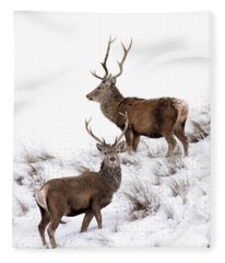 Scottish Red Deer Stags Fleece Blanket