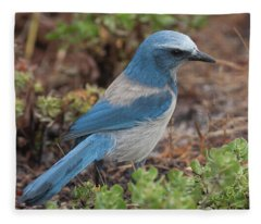 Scrub Jay Framed In Green Fleece Blanket