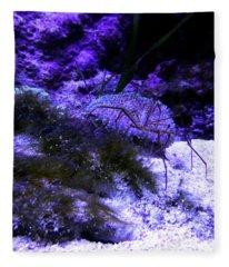 Sea Spider Fleece Blanket