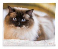 Seal Point Bicolor Ragdoll Cat Fleece Blanket