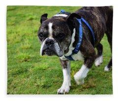 Leroy The Senior Bulldog Fleece Blanket