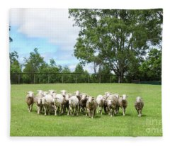 Sheep Coming Home Fleece Blanket