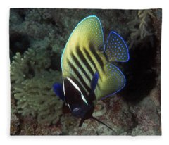 Six Banded Angelfish, Great Barrier Reef Fleece Blanket