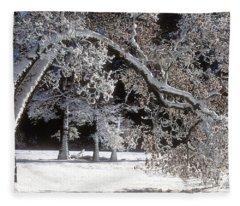 Snow Covered Black Oak Yosemite National Park Fleece Blanket