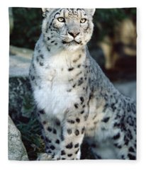 Snow Leopard Uncia Uncia Portrait Fleece Blanket