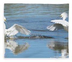 Snowy Egret Fight 3623-112317-1cr Fleece Blanket
