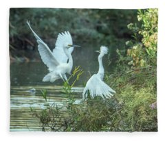 Snowy Egrets Dispute 9277-120317-2cr Fleece Blanket