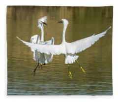 Snowy Egrets Fight 3638-112317-1cr Fleece Blanket