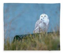 Snowy Owl On A Park Bench Fleece Blanket