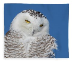Snowy Owl Portrait Fleece Blanket