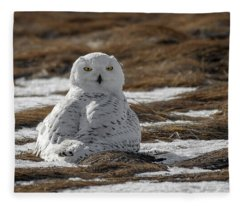 Snowy Owl,marsh Fleece Blanket