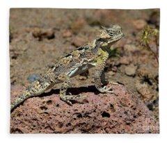 Southern Desert Horned Lizard Phrynosoma Platyrhinos Wild Fleece Blanket