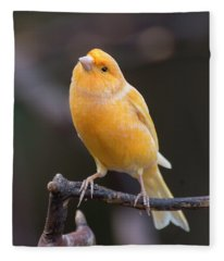 Spanish Timbrado Canary Fleece Blanket