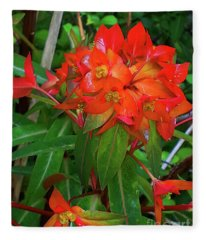 Spectacular Orange Euphorbia Or Spurge  Fleece Blanket
