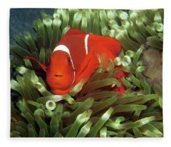 Spinecheek Anemonefish, Indonesia 2 Fleece Blanket