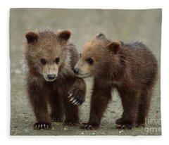 Spring Grizzly Cubs In Denali Fleece Blanket