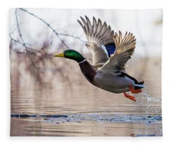 Spring Mallard  Fleece Blanket
