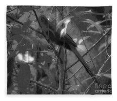 Squirrel Cuckoo  Fleece Blanket