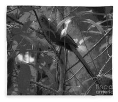 Squirrel Cuckoo  Fleece Blanket