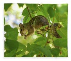 Squirrel Eating Mulberry Fleece Blanket