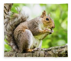 Squirrel Eating On A Branch Fleece Blanket