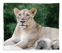 Staring Fleece Blanket