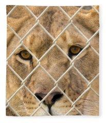 Staring Lioness Fleece Blanket
