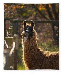 Staring Llama Fleece Blanket