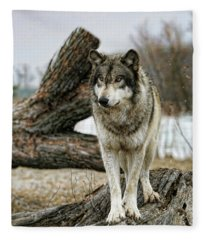 Still Wolf Fleece Blanket