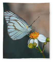 Striped Albatross Butterfly Dthn0209 Fleece Blanket