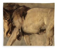 Study Of A Lion Fleece Blanket