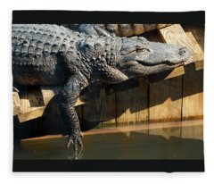 Sunbathing Gator Fleece Blanket