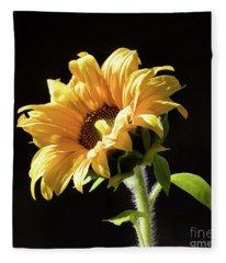 Sunflower Isloated On Black Fleece Blanket