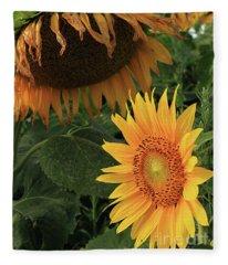 Sunflowers Past And Present Fleece Blanket