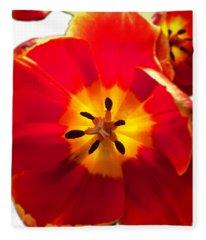 Sunkissed Tulips Fleece Blanket