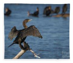 Sunning Cormorant Fleece Blanket