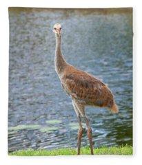 Sunrise Sunset Bailey Crane Fleece Blanket