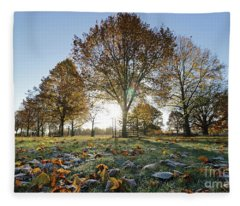 Sunrise Through Lime Trees Fleece Blanket