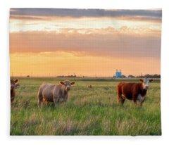 Sunset Cattle Fleece Blanket