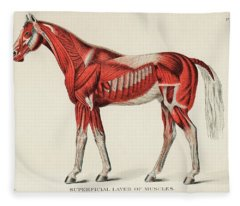 Superficial Layer Of Muscles By An Unknown Artist 1904 Fleece Blanket