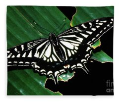 Swallowtail Butterfly- Close Fleece Blanket