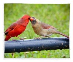 Sweet Cardinal Couple Fleece Blanket