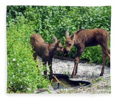 Sweet Twin Moose Calves Fleece Blanket