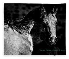 Taos Pony In B-w Fleece Blanket