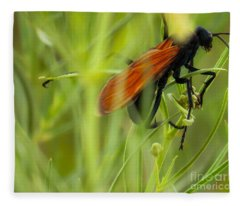 Tarantula Hawk 1 Fleece Blanket