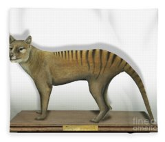 Tasmanian Tiger-thylacinus Cynocephalus-tasmanian Wolf-lobo De Tasmania-tasmanian Loup-beutelwolf    Fleece Blanket