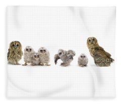 Tawny Owl Family Fleece Blanket