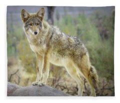 The Stance Fleece Blanket